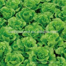 LT07 Duoke high yield green lettuce seeds, quality leaf vegetable seeds