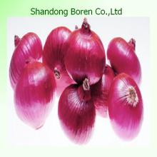 Oignon rouge à base de légumes Shandong 2015
