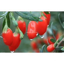 Dired Goji Berry (0006)