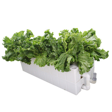 Soilless cultivation Hydroponics  vegetable planter