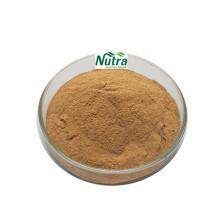 Natürliches hochwertiges Haselnuss-Extrakt-Pulver