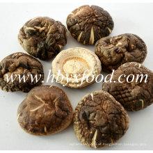 5.5cm up Dried Nutritious Smooth Shiitake Mushroom