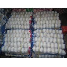 Alho branco puro chinês de alta qualidade (5.0cm e acima)