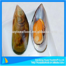frozen half shell mussel fresh seafood for sale