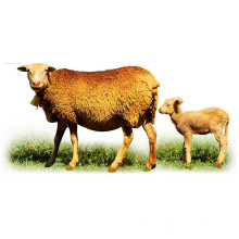 (Flavophospholipol 8%) -Promoting Growth of Animals Flavophospholipol 8%