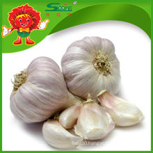 garlic garlic garlic/natural garlic/ garlic with lowest price