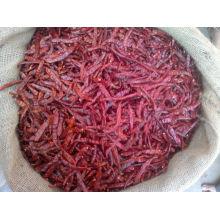 Dry red S17 chili stemless