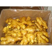2016 Crop Chinese Fresh Ginger