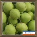 Heißer Verkauf neue Ernte frisch und süß Shandong Birne