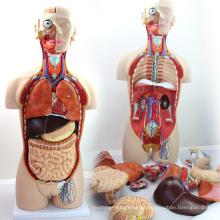 TORSO02 (12013) Medical Dual-Sex 85cm 27-peças Modelo de tronco com costas abertas, modelo de anatomia humana para a ciência médica
