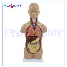 PNT-0320 torso do corpo humano médico modelo 50 CM 12 Peças