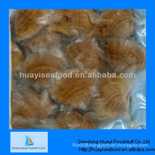 frozen boiled surf clam seafood