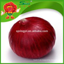 Exportación de cebolla fresca a Dubai