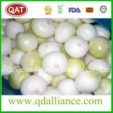 Fresh Red Purple White Peeled Onion Export to Austrilia Market