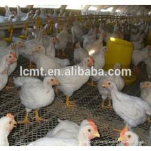poulets de chair de volaille équipement agricole pour poulailler