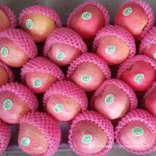 Manzana china Qinguan fresca