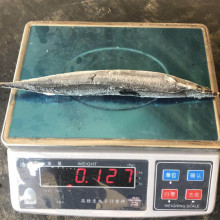 Canned Saury With Oil For Russia Market