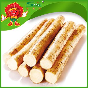 Burdock fresco chinês de alta qualidade, melhor raiz de burdock natural para exportação