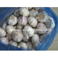 Nuevo Cultivo Mejor Ajo Chino (10kg Mesh Bag)