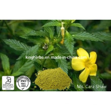 High Quality of Damiana Leaf Extract