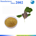 Hot selling high quality pure nature Perilla leaf Extract , Perilla Extract , Perilla leaf P.E.