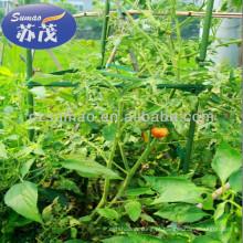 stents de tomates, stent de plantas