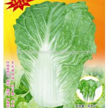 CC04 SJ No.5 semillas de repollo chino maduras tempranas, semillas híbridas de repollo chino