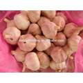 frischer Knoblauch mit Knoblauchbeutel in China