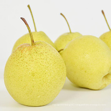 New Crop Chinese Ya Pear For Sale
