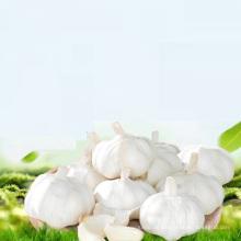 Kaufen Sie chinesische Großhandel Knoblauch Ajo / Alho / Ail-Export