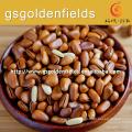 gansu price favorable pine nuts