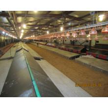 Структура стали Автоматическая куриная Ферма с домашней птицей оборудования