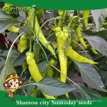 Suntoday légumes asiatiques F1 organique jusqu'à jaune kamyon Capsicum annum piment graines de piment (21027)