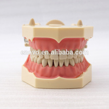32 шт съемные зубы СФ тип модели стоматологических исследование для школьного образования 13009