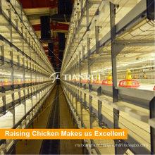 Gaiola de frango para frangos de corte automática para venda em Pilipinas