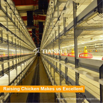 Automatic broiler chicken farm cage for sale in Pilipinas