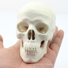 SKULL08 (12334) Mini Modelo de Crânio com valor Artístico, Modelo de Brincadeira de Mão, Modelo Anatômico de Crânio Preciso para a Ciência Médica