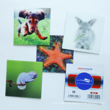 Customize High Quality 3D Fridge Magnets