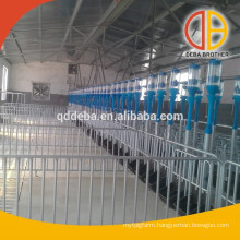 Auto Feeder System For Pigs