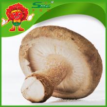 5 - 6cm Chinese fresh white button mushroom