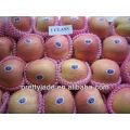 yantai fresh fuji apple