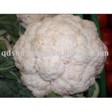 fresh white cauliflower