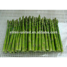 Chinese IQF frozen fresh asparagus vegetable