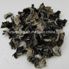 Fungus Auricularia Auricula Powder