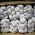 Fornecedor confiável de alho branco fresco chinês embalado em 500g x 20 / caixa