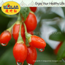 Méduse Dired Fruit Wolfberry Chinois