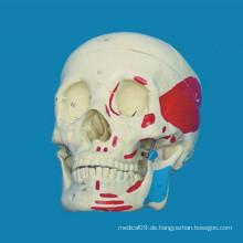 Hochqualitatives Anatomisches menschliches Schädel-medizinisches Skelettmodell (R020609)