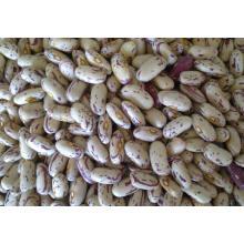 Leichte gesprenkelte Gartenbohne, Pinto Bean