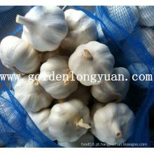 Nova colheita de alho branco puro