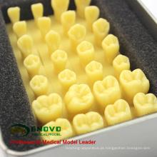 VENDER 12574 Ampliar 1,2 x Coroa Escultura preparar Dente Resina Dente